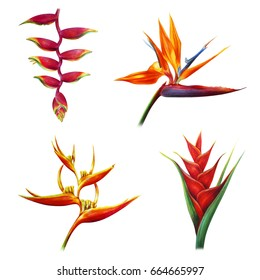 Red tropical flowers on white background (Heliconia ,Strelitzia, Rostrata, Psittacorum, Caribaea red)
