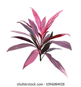 Red tropical plant. Cordyline fruticosa, Asparagus family, cabbage palm, luck plant, palm lily, ti flower. Collection with hand drawn flowers and leaves. Design for invitation or greeting cards.