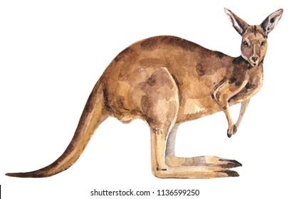 red watercolor australian kangaroo
