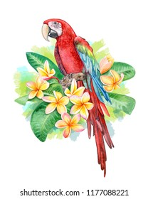 Red-and-green winged macaw. Parrot Birds sitting in Frangipani, Plumeria flowers isolated on white background. Red  parrot. Illustration. Watercolor. Template Close-up. Clip art. Hand drawing.