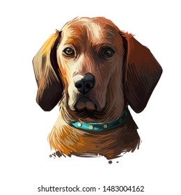 Redbone Coonhound dog portrait isolated on white. Digital art illustration of hand drawn dog for web, t-shirt print and puppy food cover design. Reds breed of dog used for hunting, Redbone Coonhound