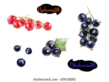 Redcurrant, blackcurrant set illustration isolated on white background.