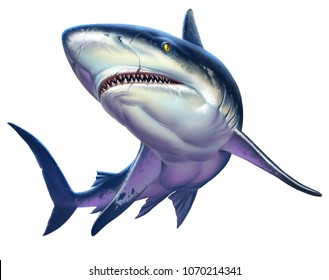 Reef shark, Caribbean reef shark. Realistic isolated illustration.