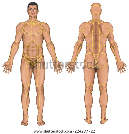 Region Human Body Regions Corporis Male Stock Illustration 224297722