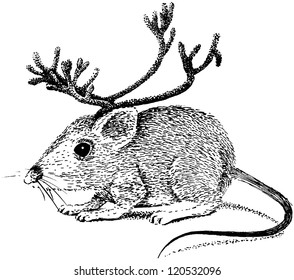 Reindeer mouse