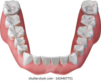 Removable lower dentures isolated on white background. Dental 3D illustration for oral cosmetics.