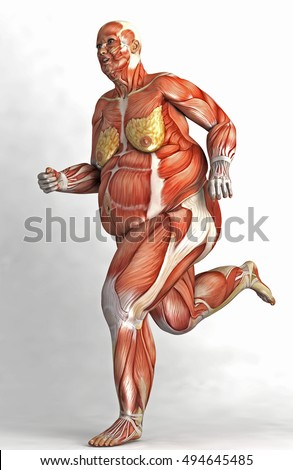 Render Anatomical Fat Woman Muscles Skin Stock Illustration ...