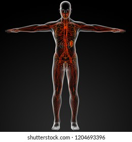 3d rendering of lymphatic system