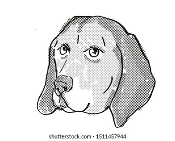 Retro cartoon style drawing of head of an American English Coonhound  , a domestic dog or canine breed on isolated white background done in black and white.