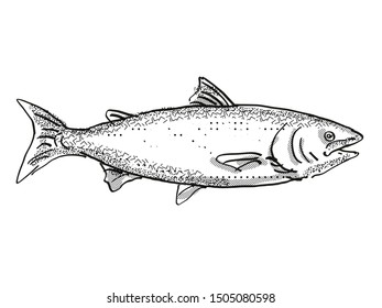 Retro cartoon style drawing of a king salmon , a native New Zealand marine life species viewed from side on isolated white background done in black and white