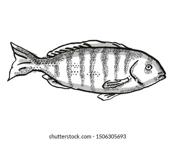 Retro cartoon style drawing of a Zebrafish , a native Australian marine life fish species viewed from side on isolated white background done in black and white.