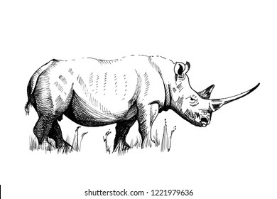 Rhino hand drawn illustrations (originals, no tracing)