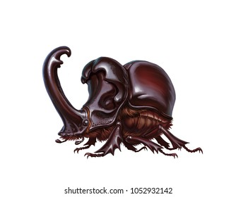 rhinoceros beetle on white. pattern or tattoo. Exotic beetles wild insect. fun beetle of chocolate coffee color