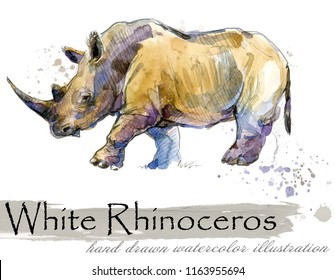 rhinoceros hand drawn watercolor illustration