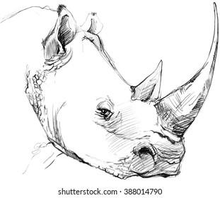 Rhinoceros pencil sketch.