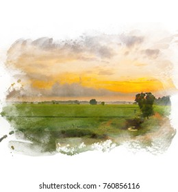 Rice field with beautiful sky on background. Watercolor painting (retouch).