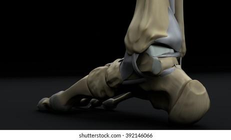 Right foot inside, rear projection