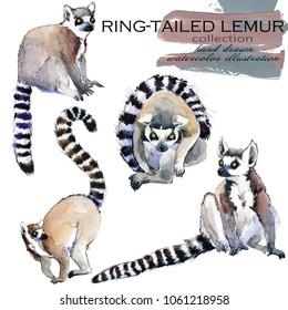 Ring-tailed Lemur hand drawn watercolor illustration set