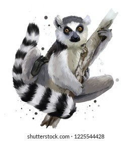 A ring-tailed lemur. Watercolor painting
