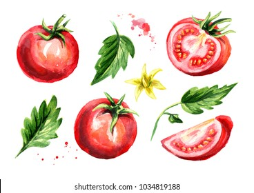 Rip tomatoes set. Watercolor hand drawn illustration, isolated on white background