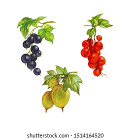 ripe berries, gooseberries, blackcurrants and red scum, set, watercolor, isolate