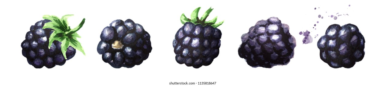 Ripe blackberries set. Watercolor hand drawn illustration, isolated on white background