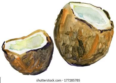 Ripe coconuts. Watercolor illustration.