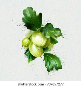 Ripe gooseberries on a branch with splashes of watercolor as an illustration for the label