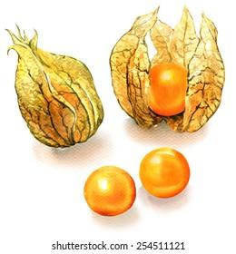Ripe physalis fruit isolated on white background