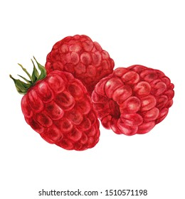 ripe raspberries, three berries close-up, watercolor illustration isolated on white background