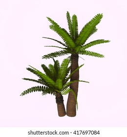 River Cycad Plants 3D Illustration - Cycads are seed plants with a long fossil history that were formerly more abundant and more diverse than they are today.