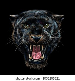 Roaring black panther on black background,digital painting