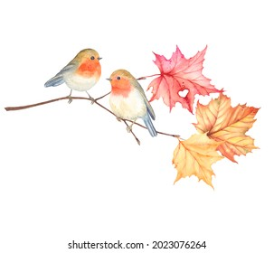 Robin birds sitting on maple branch with beautiful colorful leaves and symbol heart, watercolor romantic illustration isolated on white background for your design, autumn wedding, invitation card.
