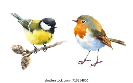 Robin and Tit Two Birds Watercolor Hand Painted Illustration Set isolated on white background