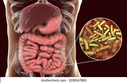 Rod-shaped bacteria Shigella which cause food-borne infection shigellosis or dysnetery, the infection of large intestine, 3D illustration