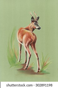 roe deer on green - pastel drawn portrait with detailed paper texture