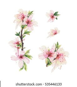 Romantic set with almond blooming branch. Hand drawn watercolor