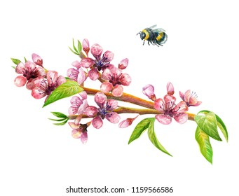 Romantic watercolour illustration of  peach/cherry branch with flowers, leaves and bumblebee.