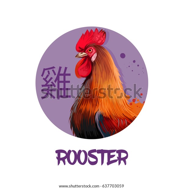 Rooster chinese horoscope character isolated on white background. Symbol Of New Year 2017. Pet hen bird in round circle with hieroglyphic sign, digital art realistic illustration, greeting card design