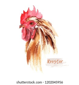 Rooster head isolated on white background. Farm bird watercolor illustration. Poultry farming. Farm animal. Logo watercolor illustration in vintage style.