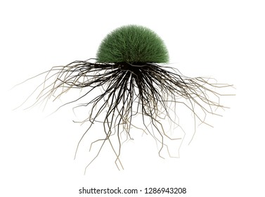 roots and grass isolated white backgroud 3d render