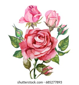 rose and buds.watercolor