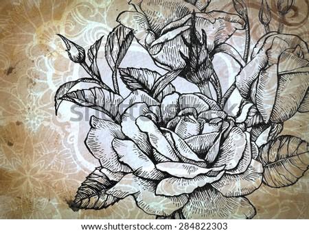 Line Drawing Of Rose Plant : Rose flower blooms buds detailed line stock illustration royalty