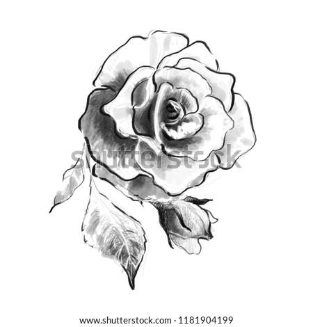 Rose Flower Pencil Drawing Sketch Black Stock Illustration Royalty