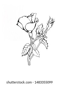 Rose Flower sketch in line art style. Design element. Isolated on white background. Tattoo art. Greeting cards.