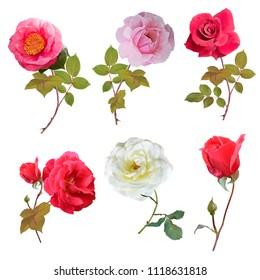 Rose flowers set ,watercolor painting