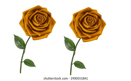 Rose flowers with white background picture