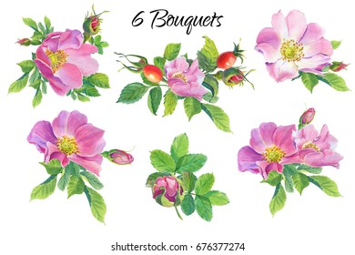 Rose Hip. Floral set.Watercolor wild  flowers on a white background.Dog-rose. illustration.Design element for scrapbooking, Invitations,greeting card,books and journals, decoupage,weddings, birthdays.