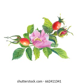 Rose Hip. Greeting card with watercolor wild  flowers on a white background.Dog-rose. illustration.Use for scrapbooking, Invitations, books and journals, decoupage,cards for weddings, birthdays