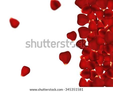 Rose Petals Background On White Beautiful Stock Illustration